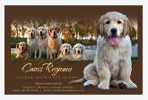 Canis Regnum