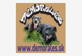 Chovateľská stanica amerických bandogov a argentínskych dog.