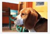 Chovateľská stanica používateľa beagle