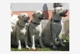 Chovateľská stanica používateľa Excelent Dogs
