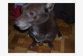 Používateľ Aliss daruje psíka