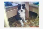 Používateľ Bady daruje psíka