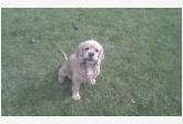 Používateľ balloo daruje psíka