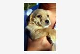 Používateľ Barbara Balazova daruje psíka