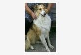 Používateľ Eva21 daruje psíka