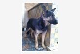 Používateľ Ferenczová daruje psíka