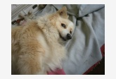Používateľ Freda daruje psíka