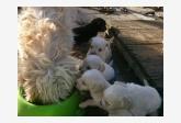 Používateľ Hacsiko daruje psíka