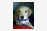 Používateľ Inez daruje psíka