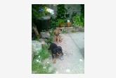 Používateľ janalupa daruje psíka