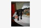 Používateľ Janička daruje psíka