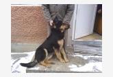 Používateľ jarop daruje psíka