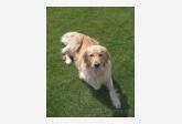 Používateľ jozefcrkon daruje psíka