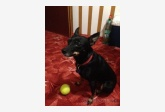 Používateľ kacenka_84 daruje psíka