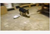 Používateľ KamK daruje psíka