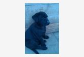 Používateľ kristina1597 daruje psíka