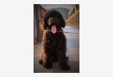 Používateľ Kvetka daruje psíka
