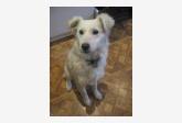 Používateľ Lucia Dohnanska daruje psíka