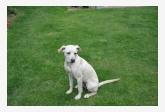 Používateľ mantazia5 daruje psíka