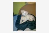 Používateľ Martina200 daruje psíka