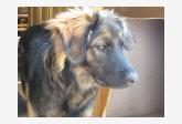 Používateľ MartinaCajova daruje psíka