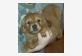 Používateľ michalslosar daruje psíka