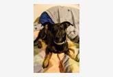 Používateľ mimka90 daruje psíka