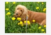 Používateľ minimajka daruje psíka