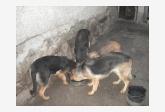 Používateľ miso NO daruje psíka