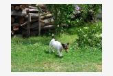 Používateľ Monikaaa daruje psíka