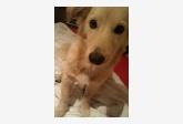 Používateľ nika_nevermore daruje psíka