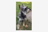 Používateľ Pipa daruje psíka