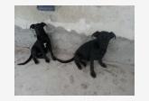 Používateľ Róbert Bučka daruje psíka