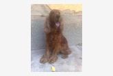 Používateľ sadriozska daruje psíka