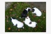 Používateľ Sheila989 daruje psíka