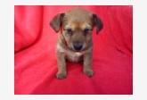 Používateľ SilviaHodúrová daruje psíka