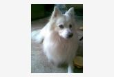 Používateľ Slavomíra9 daruje psíka