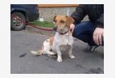 Používateľ SoňaF daruje psíka