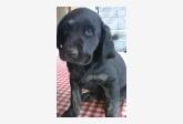Používateľ SUDOdog daruje psíka
