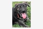 Používateľ tish29 daruje psíka