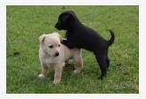Používateľ Tomas Blazek daruje psíka