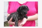 Používateľ Veronika26 daruje psíka