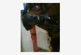 Používateľ vikus daruje psíka