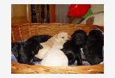 Používateľ Zuzana Holbicková daruje psíka