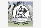 Slovakia Moloss club