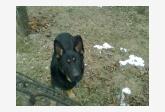 Používateľ avokapus našiel psíka