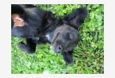 Používateľ Buco našiel psíka