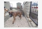 Používateľ daniellka3 našiel psíka