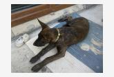 Používateľ Fidodog našiel psíka