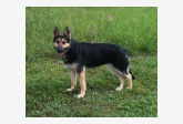 Používateľ Lupták našiel psíka